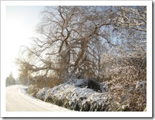 20 december - winterlandschap