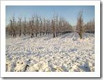 17 december - appel boomgaard