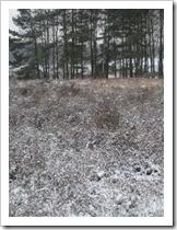 Heide en bomen onder de sneeuw